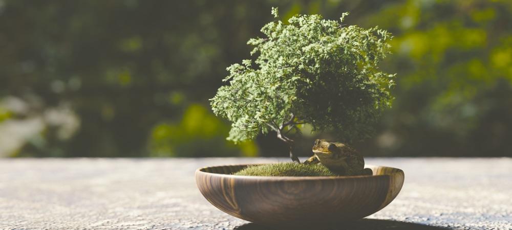 Der japanische Bonsai